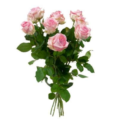 Bouquet de roses rose Hors SV
